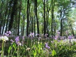 Knockatrina Wood, Durrow, Co. Laois