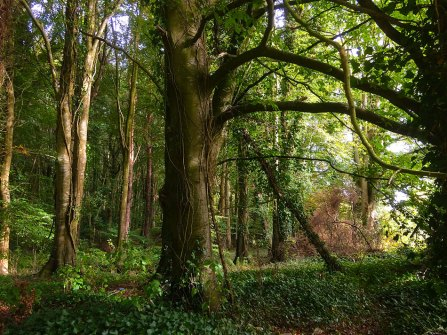 Knockatrina Wood, Durrow. October 2016.