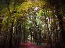 Knockatrina Wood, Durrow. October 2016.
