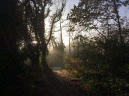 The sun emerges through the fog - Dunmore Wood, Durrow.
