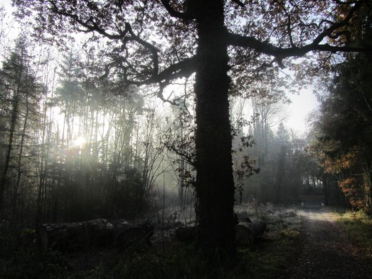 Dunmore Wood, Durrow, November 30th, 2016.