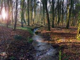 Knockatrina Wood Durrow
