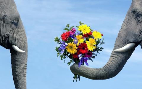 elephants_flowers-fb