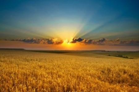 gold light_800_533