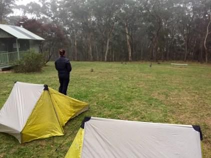 Black Range Campsite