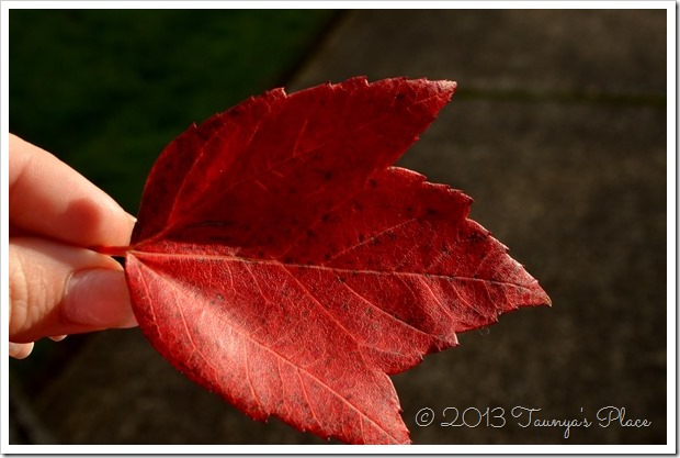 Fall is here, Red Leaf