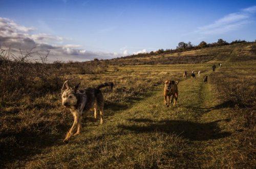dogs running free
