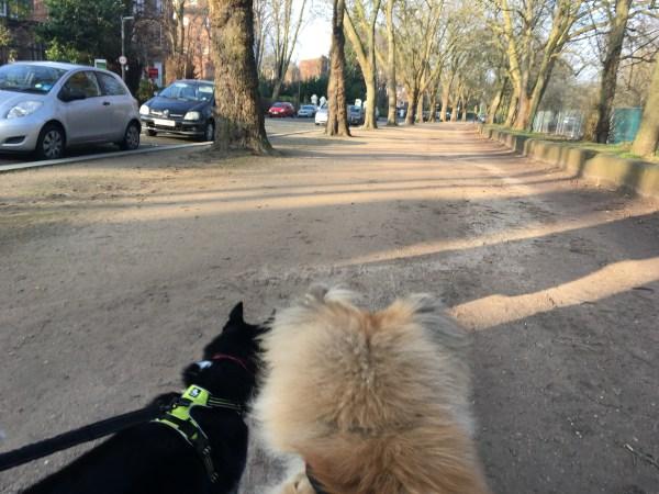 Sefton Park Dog Walk