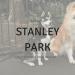 STANLEY PARK liverpool dog walks
