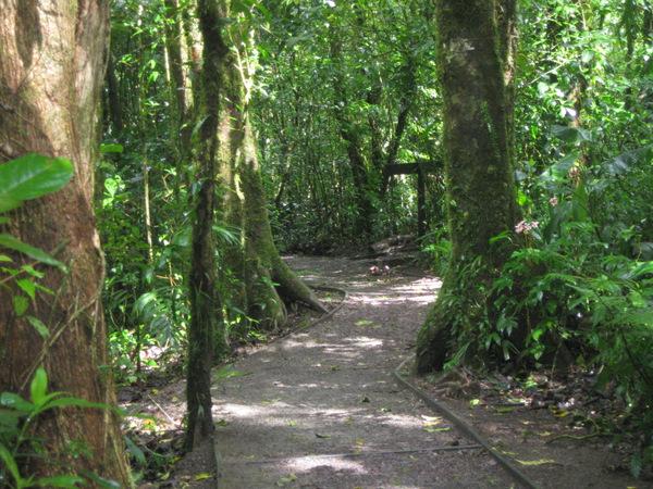 clean-trail