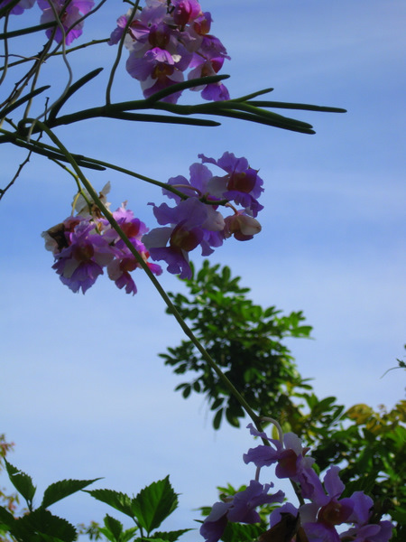 orchid-sky2