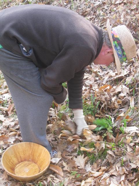 picking leeks