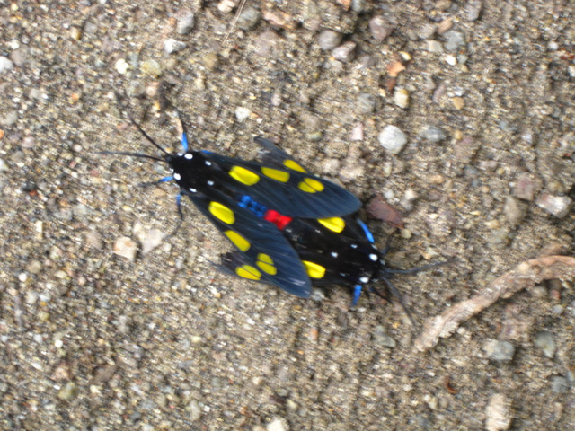 mating bugs