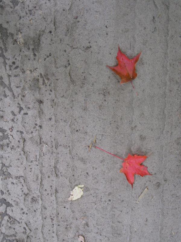 2 little leaves