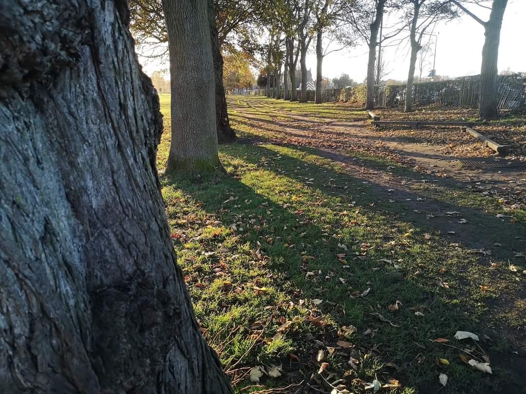 Tree-Feeling Walk
