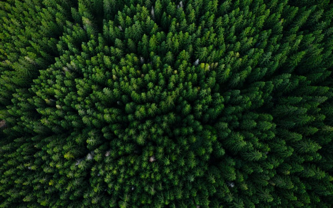 Webinar: ESG and Sustainable Investing – Aligning Your Values with Your Investments