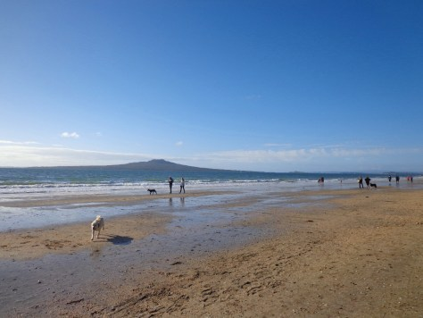 Takapuna Beach Auckland Copyright Unleashed Ventures Limited 2013