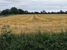 Summer harvest