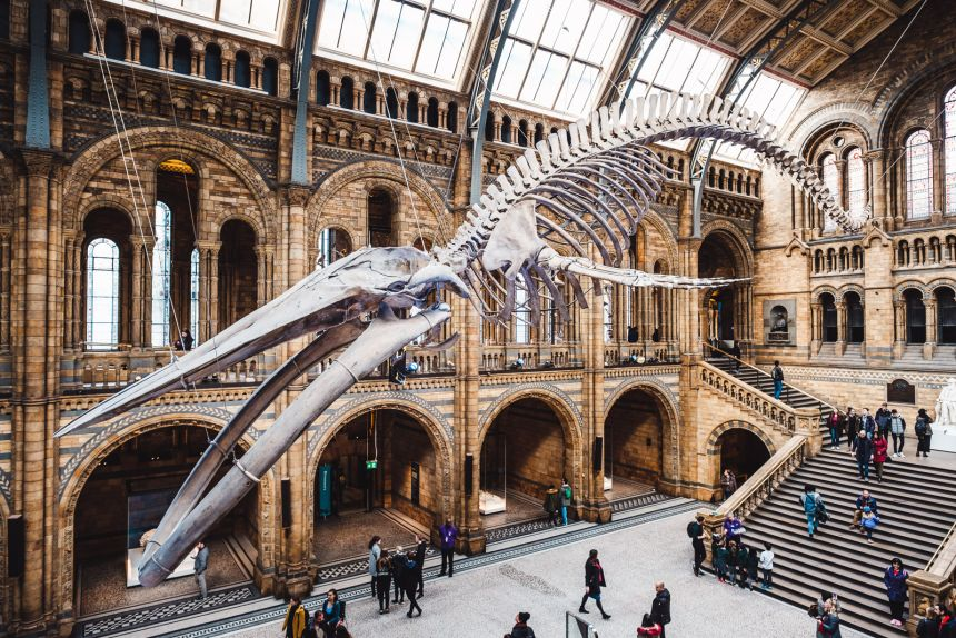 London Itinerary Hintze Hall Blue Whale