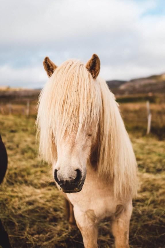 Iceland Westfjords Holmavik White Horse Fringe