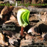 Seeds of Enlightenment Guided Meditation