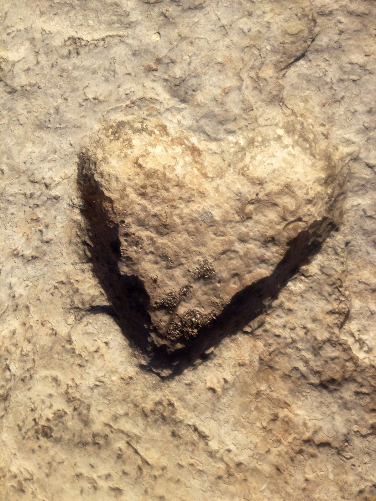 heart fossil
