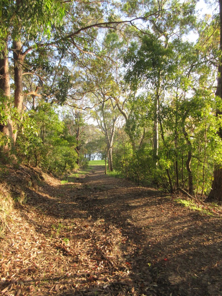 The path through Green Point Reserve, leading down to the Georges River.