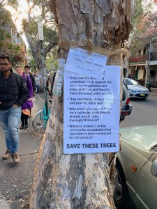 """""""Sign the petition!"""" """"Save the Trees on Lawson Street Redfern' """"Change.org"""" """"These mature flowering paperbarks help support the city's bee population ..."""""""