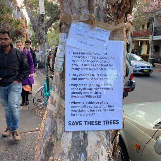 """Sign the petition!"" ""Save the Trees on Lawson Street Redfern' ""Change.org"" ""These mature flowering paperbarks help support the city's bee population ..."""
