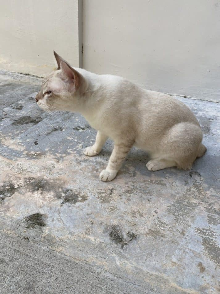 Why Do Cats Roll On Concrete : concrete, Cement, Other, Walkthepets