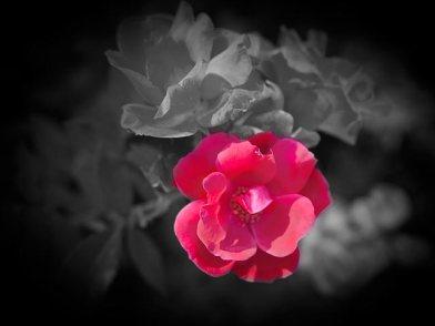 Late spring flora