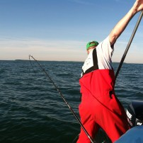 Netting a Lake Erie walleye!