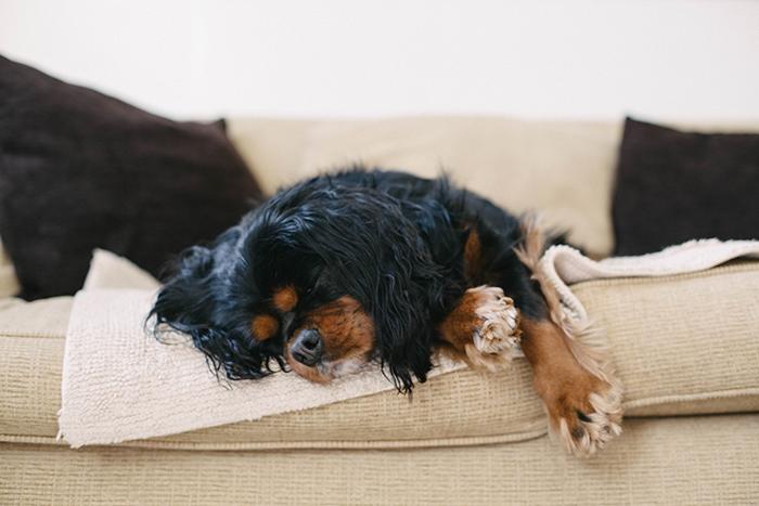 Molly-sleeping