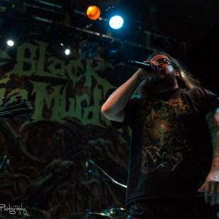 black dahlia (13)