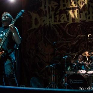 black dahlia (8)