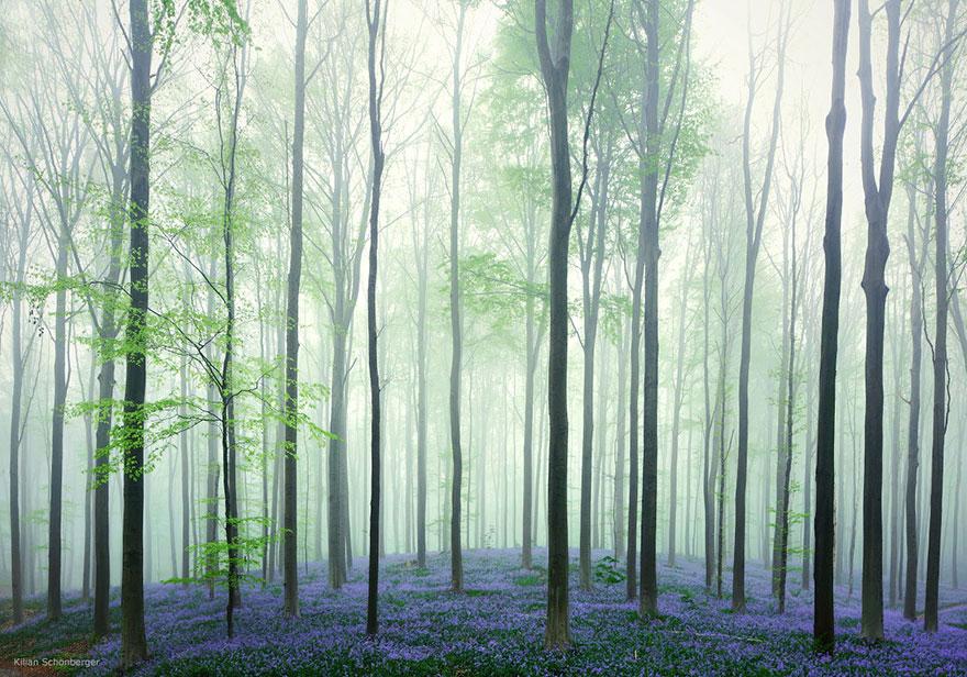 LEMPEREUR : L'arbre dans le patrimoine culturel immatériel (2009)