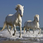 Wild Horse Wallpapers Group 74