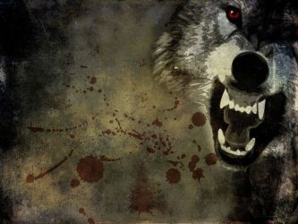 Gallery for angry wolf wallpaper