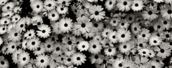 Black And White Flowers Wallpapers Group (59+)