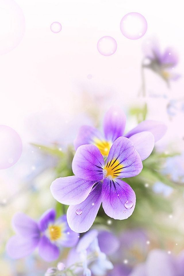 colorful flowers wallpapers for mobile phones wallpaper