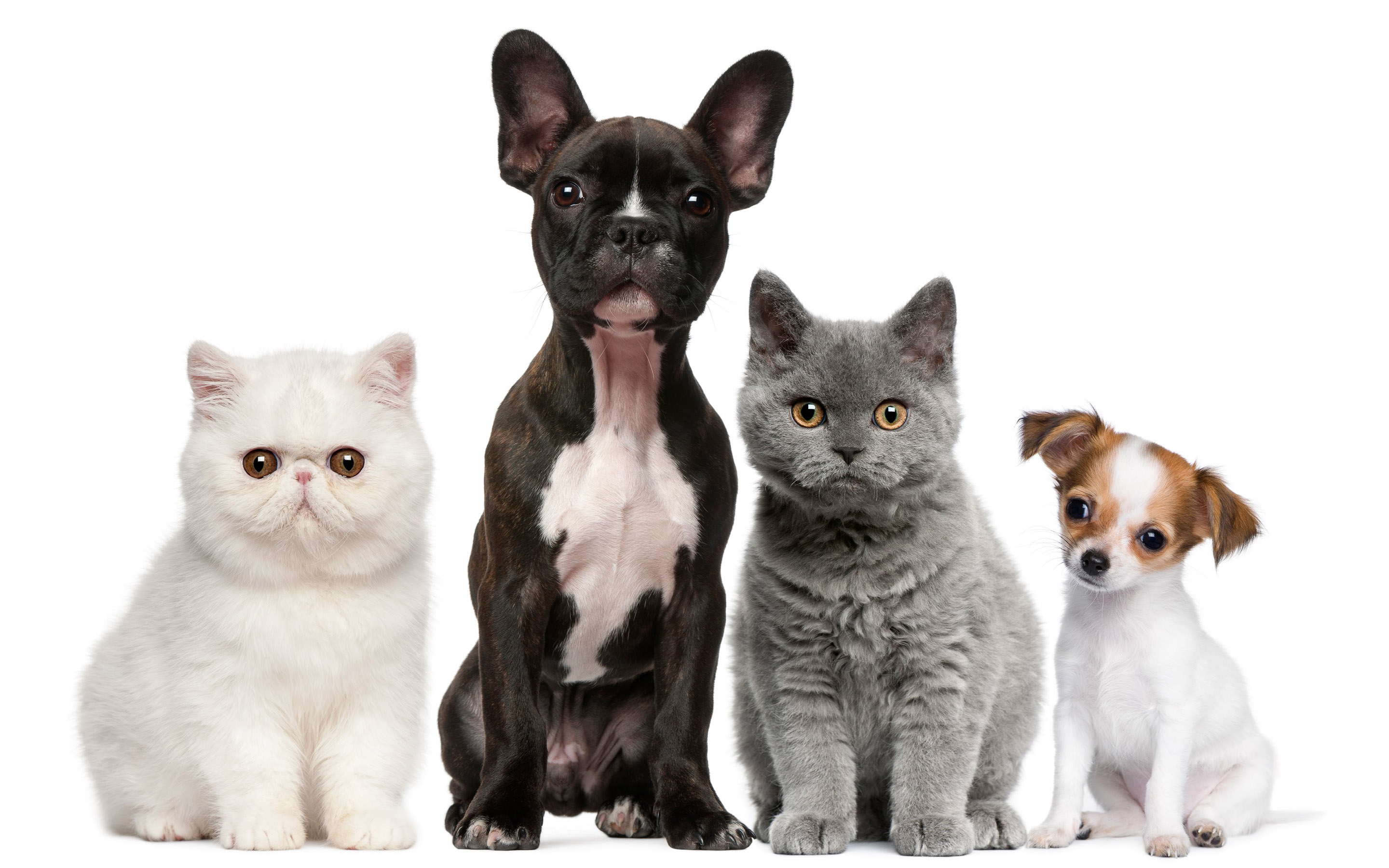 Cats And Dogs Wallpapers Group 82