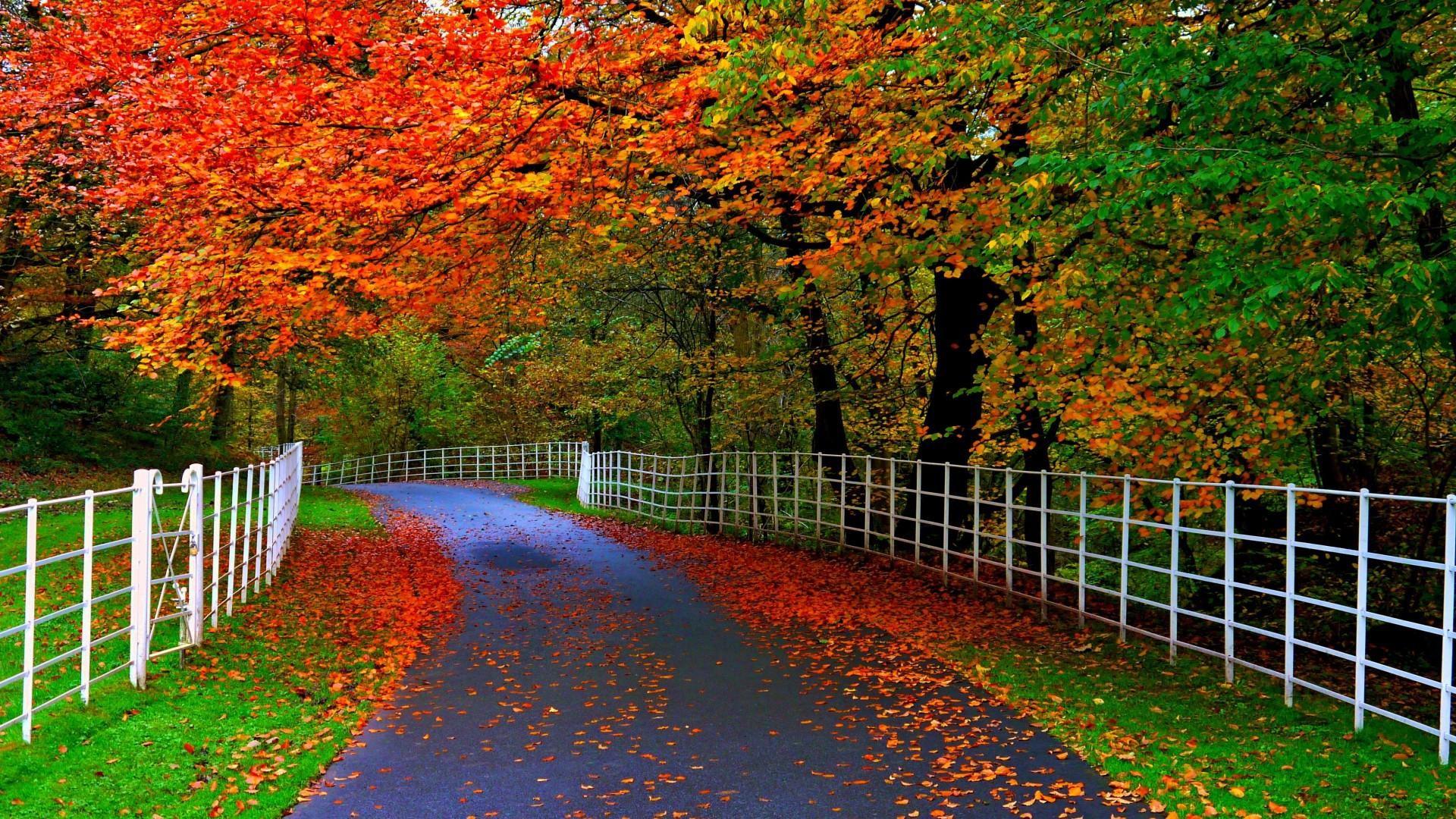 Download Beautiful Nature Wallpapers For Desktop Group 80