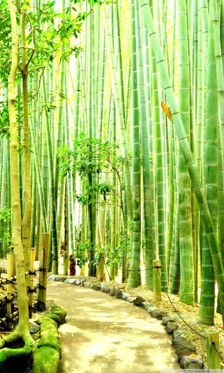 Bamboo Wallpaper Hd : bamboo, wallpaper, Bamboo, IPhone, Wallpapers, WallpaperDog