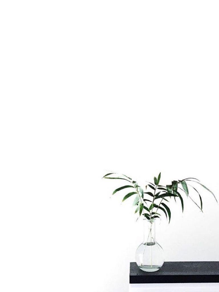 Minimalist Aesthetic Plant Wallpaper : minimalist, aesthetic, plant, wallpaper, Minimalist, Plant, Wallpapers, WallpaperDog
