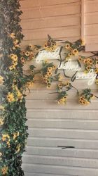 aesthetic wallpapers yellow pastel flower flowers warm rose iphone pink dog backgrounds wallpaperaccess imgur vibes sunflower lockscreen lockscreens christmas disimpan