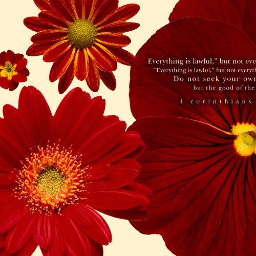 1 Corinthians 10:23-24 christian wallpaper free download. Use on PC, Mac, Android, iPhone or any device you like.