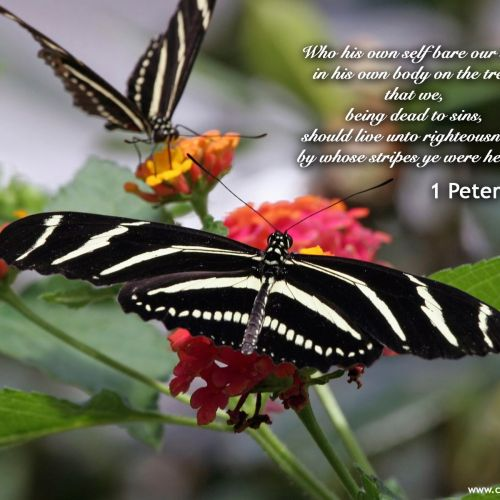 1 Peter 2:24 christian wallpaper free download. Use on PC, Mac, Android, iPhone or any device you like.