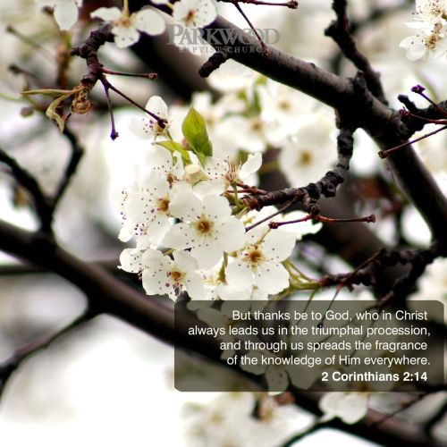2 Corinthians 2:14 christian wallpaper free download. Use on PC, Mac, Android, iPhone or any device you like.