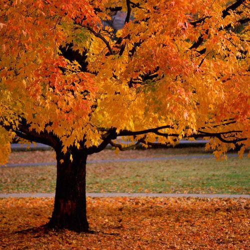 Autumn christian wallpaper free download. Use on PC, Mac, Android, iPhone or any device you like.
