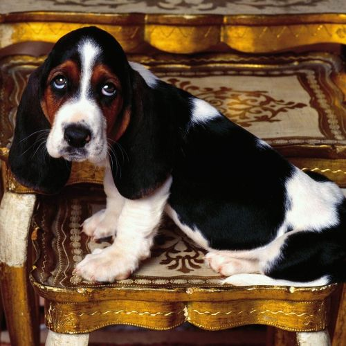 Basset christian wallpaper free download. Use on PC, Mac, Android, iPhone or any device you like.